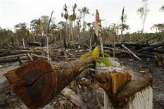 Uma muda ascende do chão numa área deflorestada da selva amazônica. O desmatamento na Amazônia Legal registrado entre agosto de 2011 e julho de 2012 chegou a 4.656 quilômetros quadrados --menor taxa desde o início das medições--, apesar do crescimento no ritmo de degradação da vegetação em três Estados. 11/12/2009 REUTERS/Bruno Kelly-Amazonaspress