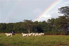 Gado é arrebanhado por pecuarista em Minas Gerais, em outubro. Os preços das terras agrícolas no Brasil tiveram valorização média de 14,22 por cento ao ano entre 2002 e 2011, bem acima da inflação, revela um estudo inédito da consultoria Informa Economics FNP, ao qual a Reuters teve acesso. 20/10/2012 REUTERS/Reese Ewing