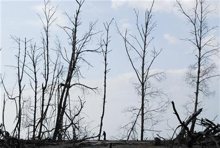 A resident walks past dead mangrove trees at the small community of La Tirana, about 110 kilometres (68 miles) from San Salvador August 3, 2012. REUTERS/Ulises Rodriguez/Files