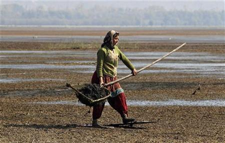 A Kashmiri village woman walks over marshy land while wearing wooden boards on her feet, to collect water chestnuts from the waters of Wular Lake at Bandipora, about 65 km (40 miles) north of Srinagar, November 5, 2012. REUTERS/Danish Ismail