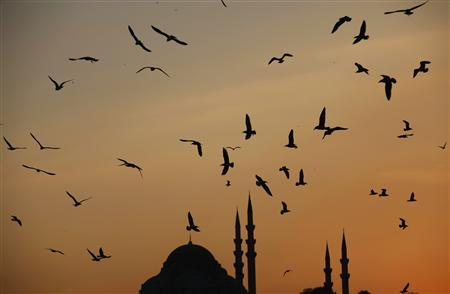 Seagulls fly over Golden Horn as the sun sets over the Ottoman-era Suleymaniye Mosque in Istanbul November 26, 2012. REUTERS/Murad Sezer