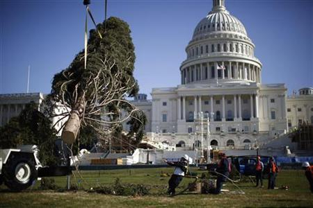The U.S. Capitol Christmas Tree is pulled by workers into place as it is delivered to the west side of the U.S. Capitol in Washington November 26, 2012. The Engelmann Spruce is from Meeker, Colorado and is part of an annual tradition since 1964 and will be decorated in the coming days for the holidays. REUTERS/Jason Reed (UNITED STATES - Tags: SOCIETY)
