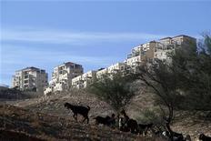 Reino Unido y Francia condenaron el sábado un plan de Israel para ampliar sus asentamientos en la Cisjordania Ocupada y Jerusalén Este, diciendo que está poniendo en riesgo la confianza internacional sobre su deseo de lograr la paz con los palestinos. En la imagen, unas cabras pastan cerca del asentamiento judío de Maale Adumim, cerca de Jerusalén, el 1 de diciembre de 2012. REUTERS/Baz Ratner