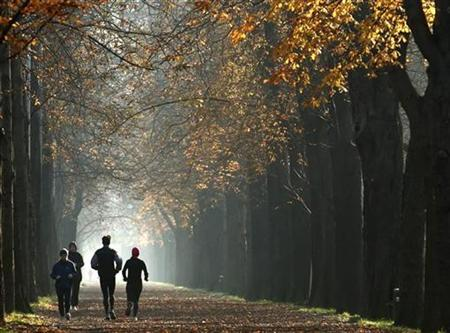 Joggers run along a path in a park on an autumn day in Vienna November 14, 2012. REUTERS/Heinz-Peter Bader