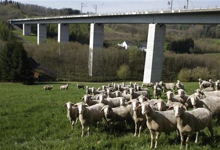 A flock of sheep stand before the bridge where a high-speed German Intercity Express (ICE) derailed near the central town of Fulda April 27, 2008. REUTERS/Johannes Eisele (GERMANY)
