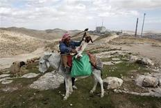A Palestinian puts a newborn lamb on a donkey in an area near Jerusalem known as E1, where there are plans for construction of some 3,000 settler homes December 6, 2012. REUTERS/Baz Ratner