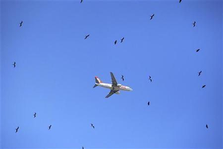 A commercial jet belonging to Brazilian airlines Gol flies high above a flock of birds in Rio de Janeiro February 14, 2010. REUTERS/Ricardo Moraes