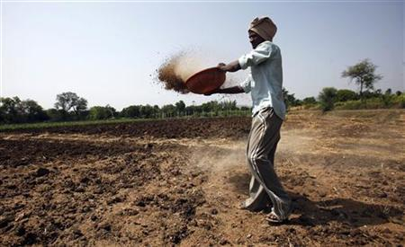 A farmer spreads fertiliser on his field in Satara district, about 285 km (177 miles) south of Mumbai, May 11, 2011. REUTERS/Vivek Prakash/Files