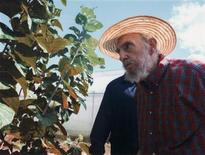 Former Cuban leader Fidel Castro stands beside a plant in Havana in this picture released by Cuban website Cubadebate October 19, 2012. REUTERS/Alex Castro/Courtesy of Cubadebate