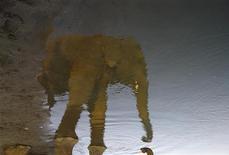 Слон отражается в реке Рапти в Национальном парке Читван в Непале 28 декабря 2011 года. Непальские солдаты открыли охоту на дикого слона, который за три месяца убил уже четырех жителей деревень в южной части страны, сообщили чиновники в понедельник. REUTERS/Navesh Chitrakar