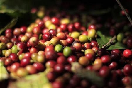 Freshly harvested coffee beans are seen at the Santa Adelaida coffee cooperative in La Libertad, on the outskirts of San Salvador December 10, 2012. Once a family-owned coffee plantation split under a 1980 land reform, the Santa Adelaida coffee is now a cooperative dedicated to the production of organically-grown high ground coffee, which is certified by is non-governmental organization Rainforest Alliance, and exported to Germany, the U.S., Britain and Japan. The coffee plantation is currently run by a cooperative of over 150 members. Picture taken December 10, 2012. REUTERS/Ulises Rodriguez (EL SALVADOR - Tags: BUSINESS COMMODITIES AGRICULTURE)