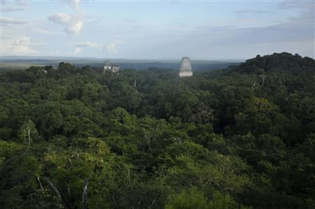 The ruins of the Maya temples of the ancient city of Tikal are seen December 14, 2012. REUTERS/Mike McDonald