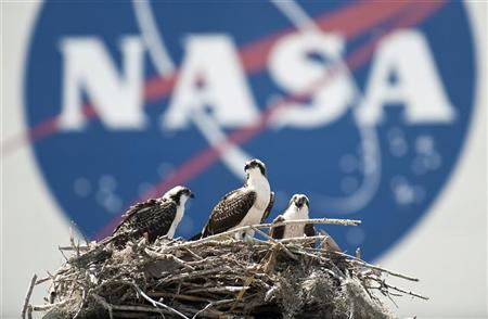 A family of Osprey are seen outside the NASA Kennedy Space Center Vehicle Assembly Building (VAB) in Cape Canaveral, Florida on Thursday May 13, 2010. REUTERS/Bill Ingalls/NASA/Handout