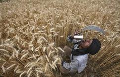 Trabalhador bebe água durante colheita de trigo em plantação no vilarejo de Jhanpur, no Estado de Punjab, na Índia. 18/04/2012 REUTERS/Ajay Verma