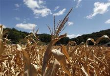Imagen de archivo de un maizal dañado por la sequía en Missouri, EEUU, ago 13 2012. Un sondeo de Farm Futures Magazine reveló que la producción de maíz estadounidense totalizó 10.620 millones de bushels (269,74 millones de toneladas) en el 2012, o casi un 1 por ciento menos que la última estimación del Departamento de Agricultura de Estados Unidos (USDA). REUTERS/Larry Downing