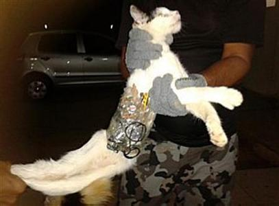 A prison guard holds a cat that has objects wrapped around his body with tape at a prison in Arapiraca in this handout photo obtained by Reuters on January 5, 2013. A cat carrying a saw and a mobile phone was ''detained'' as it entered a prison gate in northeast Brazil, Brazilian media reported on Saturday. Prison guards were surprised when they saw a white cat crossing the main gate of the prison, its body wrapped with tape. A closer look showed the feline also carried drills, an earphone, a memory card, batteries and a phone charger. REUTERS/Superintendent General of Prison Administration shows /Handout