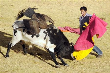 An man performs a pass to a bull with an Andean condor strapped on its back during a traditional festivity known as 'Yawar Fiesta' in the village of Coyllurqui in Cotabambas province, Apurimac, July 29, 2008. REUTERS/Nicolas Villaume