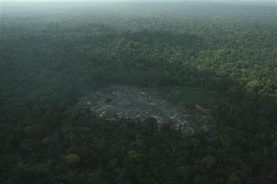 Exclusive: Deforestation appears to rise again in...