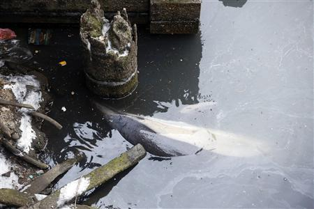 A dolphin struggles in the garbage-filled headwaters of Gowanus Canal in Brooklyn, New York, January 25, 2013. REUTERS/Brendan McDermid