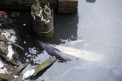 Dead dolphin removed from toxic New York City canal