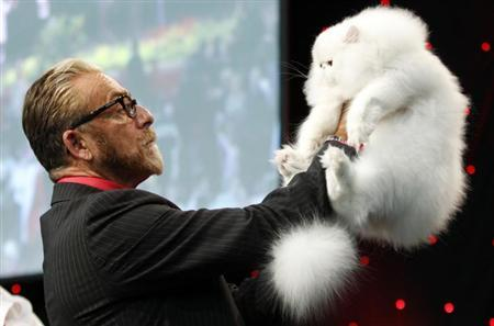 A judge inspects a White Persian during the World Cat Show in Zagreb October 28, 2012. REUTERS/Antonio Bronic/Files