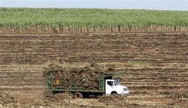 Um caminhão leva um carregamento de cana de açúcar para uma refinaria no sul do Paraná. O reajuste da gasolina abre espaço para um aumento do preço do etanol ao consumidor final que poderá atingir um percentual equivalente ao do combustível fóssil, mas é insuficiente para cobrir a situação de aperto vivida pela indústria da cana. 11/03/2006 REUTERS/Paulo Whitaker