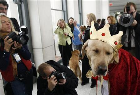 Sabrina Fairchild, a five-year-old female Labrador Retriever, is photographed by members of the media after the breed was named the most popular dog by the American Kennel Club in New York January 15, 2007. REUTERS/Keith Bedford
