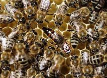 Commissione Ue propone restrizioni uso pesticidi che danneggiano api REUTERS/Ognen Teofilovski