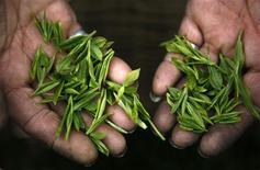 China elaborará políticas encaminadas a acelerar la transferencia de tierras rurales como parte de los esfuerzos por mejorar la eficiencia y promover la agricultura comercial a gran escala, dijo el jueves el Gobierno. En la imagen, una mujer con hojas de té en la plantación de Moganshan, en la provincia china de Zhejiang, el 19 de abril de 2012. REUTERS/Carlos Barria/File