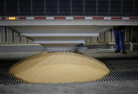 A truckload of corn is dumped into a chute at the Lincolnway Energy plant in the town of Nevada, Iowa, December 6, 2007. REUTERS/Jason Reed