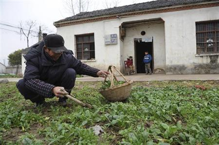 A man smiles as he collects vegetables at his farm in Yangwang village of Liangyuan township, Anhui province, February 4, 2013. REUTERS/Stringer