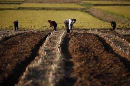 North Korean farmers work in a field of a collective farm in the area damaged by recent floods and typhoons in the South Hwanghae province September 30, 2011. REUTERS/Damir Sagolj/Files