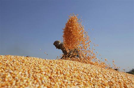 A worker spreads out corn to dry after harvesting them from the cobs, before selling them at a market in Lahore February 7, 2013. REUTERS/Mohsin Raza