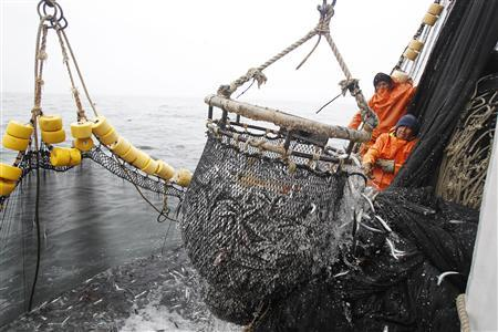 Fishermen pull a basket filled with anchovies aboard a fishing boat at the Pacific Ocean, off of Peru's northern port of Chimbote, December 21, 2012. REUTERS/Enrique Castro-Mendivil
