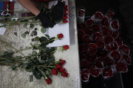 A worker selects roses for export before Valentine's Day at Elite Flowers in Facatativa February 6, 2013. REUTERS/John Vizcaino