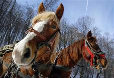 Two horses are harnessed to a cart on a road near Ucea de Jos village, 260 km (159 miles) northwest of Bucharest February 12, 2013. REUTERS/Bogdan Cristel