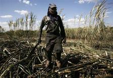 Um funcionário corta cana de açúcar no moinho de São Martinho em Pradópolis, a noroeste de São Paulo. As compras chinesas de açúcar bruto superaram as expectativas no mês passado, enquanto a Rússia tem comprado constantemente antes da esperada alta em suas taxas de importação em maio. 6/08/2007 REUTERS/Rickey Rogers