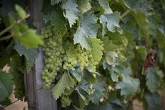 Les exportations de vins et spiritueux français ont bondi de 10% en 2012 pour atteindre le niveau record de 11,2 milliards d'euros, tirées notamment par une forte demande chinoise et américaine pour le bordeaux, le champagne et le cognac. /Photo d'archives/REUTERS/Bruno Martin