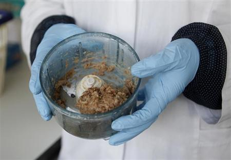 Minced meat is crushed at a laboratory of the federal state of North Rhine-Westphalia's food control institute in the western city of Krefeld February 13, 2013. (GERMANY - Tags: AGRICULTURE BUSINESS POLITICS FOOD) - RTR3DQHC