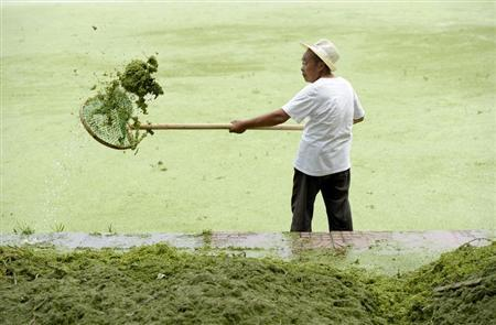 A cleaner removes algae from the algae-filled Yueya Lake in Nanjing, Jiangsu province June 8, 2012. REUTERS/Sean Yong (CHINA - Tags: SOCIETY ENVIRONMENT) - RTR339X2
