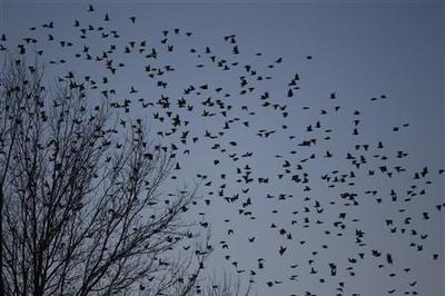Bird invasion brings real-life horror to Kentucky city