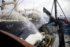 Activistas defensores de las ballenas pidieron el miércoles que Australia envíe un barco de la Marina al océano Antártico, tras un enfrentamiento en el que según dijeron un ballenero japonés colisionó con dos de sus embarcaciones de protesta, dañando su barco enseña. En la imagen, la embarcación japonesa de investigación Nisshin Maru utiliza cañones de agua contra el barco de Sea Sheperd Steve itwin en la bahía Mackenzie, en la Atnártida, en esta imagen prporcionada por Sea Sheperd Australia el 19 de febrero de 2013. REUTERS/HANDOUT ESTA IMAGEN HA SIDO PROPORCIONADA POR UN TERCERO. REUTERS LA DISTRIBUYE, EXACTAMENTE COMO LA RECIBIÓ, COMO UN SERVICIO A SUS CLIENTES.
