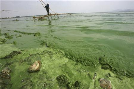 A fisherman looks for fish in the algae-filled Dianchi Lake in Kunming, Yunnan province in this May 12, 2009 file photo. REUTERS/Stringer/Files