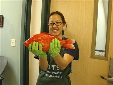 Researcher Christine Ngai is seen with a Lake Tahoe goldfish in 2009, in this handout photo courtesy of the Tahoe Environmental Research Center at the University of California Davis. REUTERS/Tahoe Environmental Research Center/University of California Davis/Handout