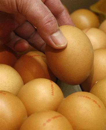 Germany investigates possible organic egg fraud