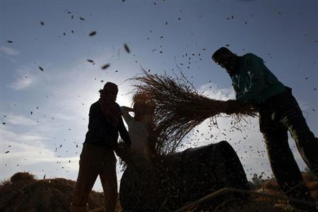 Kashmiri farmers thresh paddy plants in their field during harvesting season in Bhatpora on the outskirts of Srinagar October 9, 2012. REUTERS/Fayaz Kabli/Files