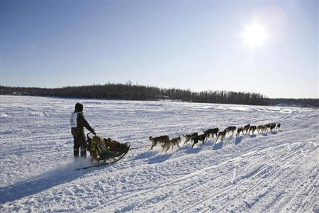 Brent Sass of Fairbanks, Alaska, takes his team towards Nome at the official re-start of the 40th Iditarod Trail Sled Dog Race in Willow, Alaska March 4, 2012. REUTERS/Wayde Carroll