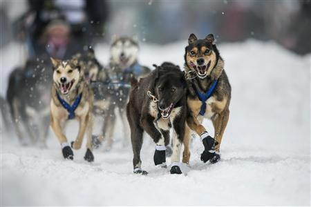 The dogs of musher Jessica Hendricks charge out of the start gate at the ceremonial start to the Iditarod dog sled race in downtown Anchorage, Alaska March 2, 2013. REUTERS/Nathaniel Wilder