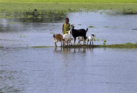 A flood-affected girl stands with goats on the banks of Kosi river at Kusaha village in Purniya district in Bihar August 31, 2008. REUTERS/Rupak De Chowdhuri/Files
