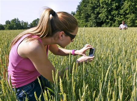 Karen Braun, a senior analyst for Lanworth Commodities, takes photographs of wheat during a study to determine how recent hail storms will effect upcoming crop yields on a farm near Effingham in southern Illinois, May 15, 2012. REUTERS/Sarah Conard (UNITED STATES - Tags: AGRICULTURE SCIENCE TECHNOLOGY FOOD) - RTR3AQOS